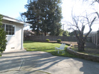Back Yard  - 4690 Doyle Rd, San Jose 95129