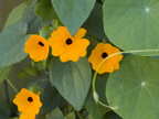 Flower Orange  - 126 Albacore Ln, Foster City 94404