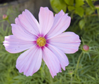 126 Albacore Ln, Foster City 94404 - Flower Pink