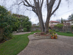 871 Sycamore Dr, Palo Alto 94303 - Backyard (B)