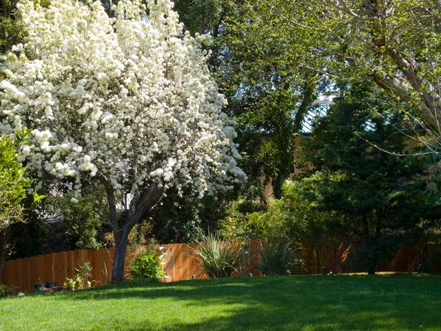 Apple Tree (B) - 605 W Hillsdale Blvd