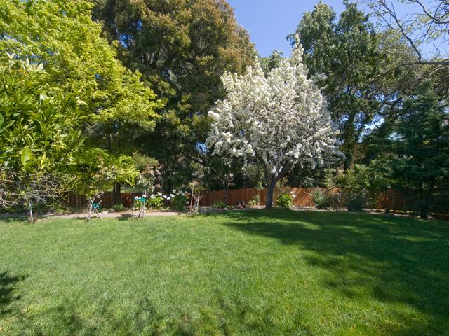 Apple Tree  - 605 W Hillsdale Blvd