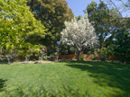 605 W Hillsdale Blvd, San Mateo 94403 - Apple Tree