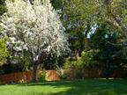 605 W Hillsdale Blvd, San Mateo 94403 - Pear Tree (B)