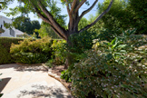 265 Tennyson Ave, Palo Alto 94301 - Backyard (A)