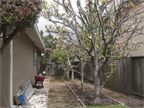 300 Mullet Ct, Foster City 94404 - Side Yard (A)