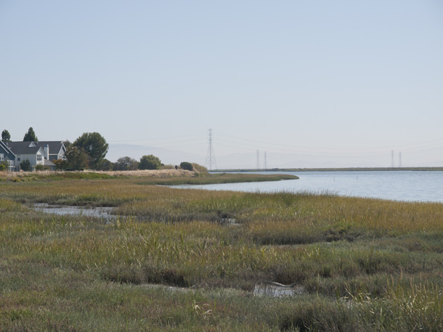 Nearby Baylands