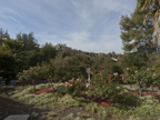 27197 Black Mountain Rd, Los Altos 94022 - Backyard (A)