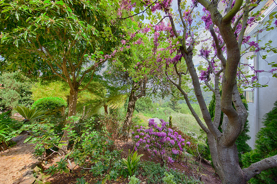 Garden Path (B)