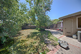 3204 Greer Rd, Palo Alto 94303 - Backyard (A)
