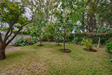 Mini Orchard (A) - 704 Winchester Dr, Burlingame 94010