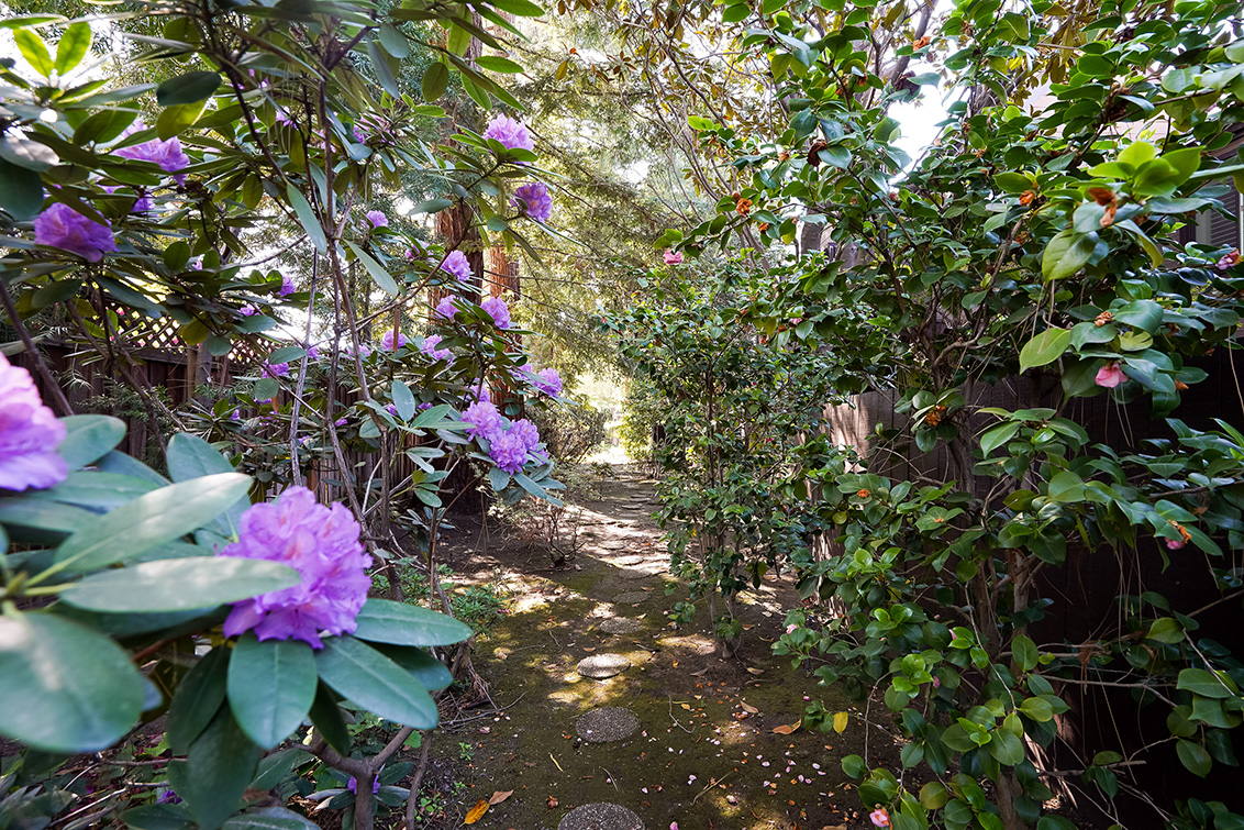 Rhododendron  - 4102 Thain Way
