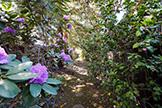 4102 Thain Way, Palo Alto 94306 - Rhododendron